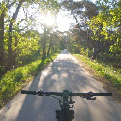 busker-background-zomer